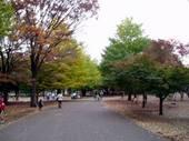 051113koganei_park