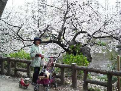 080404inokashira_park012