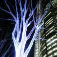 六本木ヒルズ 光の樹